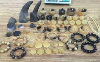 Rhino Horns & Products